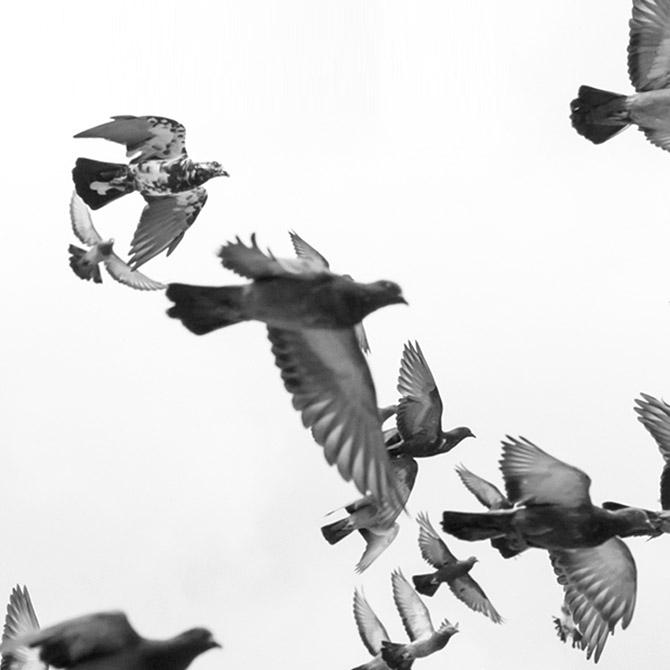 비둘기 퇴치 시공