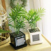 모던 화분 테이블야자 공기정화식물 화이트