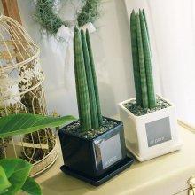 모던 화분 스투키 공기정화식물 화이트