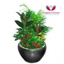 작은정원 일반형 관엽식물 공기정화 꽃배달