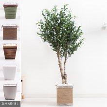 올리브나무화분set 170cm K_M [조화] 사방형:빈티지마야우드화분(28cm) 5-5