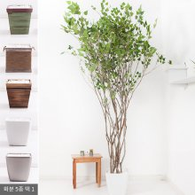 라인-자작나무화분set 210cm K_M [조화] 사방형:빈티지마야우드화분(28cm) 5-5
