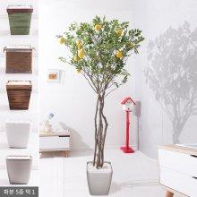 라인-레몬나무화분set 210cm K [조화] 사방형:빈티지마야우드화분(28cm) 5-5