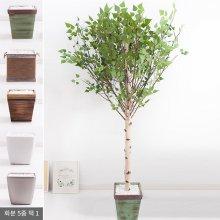 기본Y자형 자작나무화분 set 230cm (조화) FREOFT 벽면형:빈티지마야우드화분(28cm) 5-5