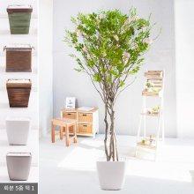 라인-지니아나무화분set 210cm (조화) FREOFT 벽면형:빈티지마야우드화분(28cm) 5-5