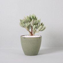 조화 다육식물 다육이 미니화분 에케베리아화사 23cm