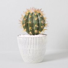 조화 다육식물 다육이 미니화분 금호선인장 28cm(L)
