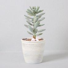 조화 다육식물 다육이 미니화분 월미인 29cm