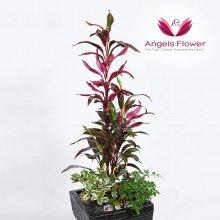 모듬식물 대형 관엽식물 공기정화 꽃배달