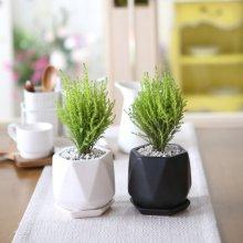 리솜 화분 율마 공기정화식물 화이트