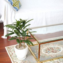 테라조 화분 관음죽 중형 공기정화식물 화이트